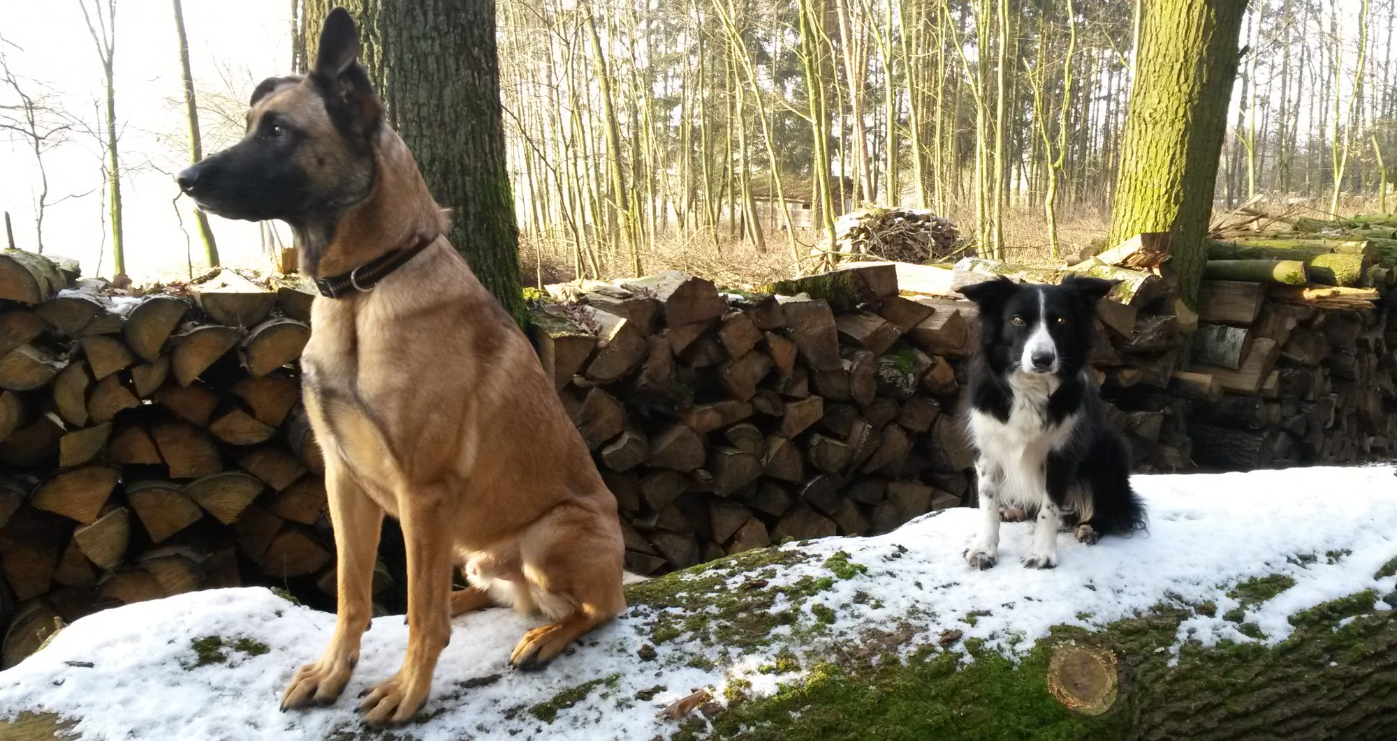 Hundeausbildung Limes-Dog